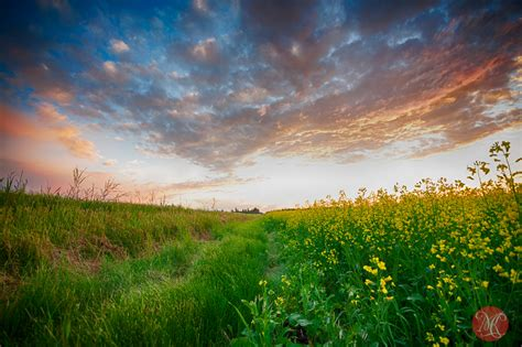 canola shot landscape photography