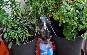 Pflanze In Flasche : bew sserungssystem mein naschbalkon ~ Whattoseeinmadrid.com Haus und Dekorationen