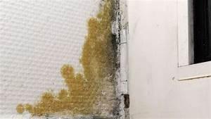 Schimmel Selbst Entfernen : mieter verursacht schimmel mangel selbst beseitigen wohnen ~ Eleganceandgraceweddings.com Haus und Dekorationen