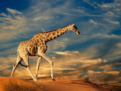 Live Animal Wallpaper Free - animals wallpapers free
