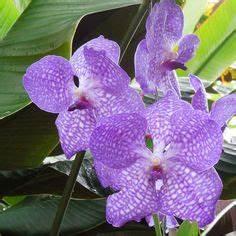 Orchidee Vanda Pflege : zimmerpflanzen sch ne dekoideen orchidee pflege terrarium ~ Lizthompson.info Haus und Dekorationen