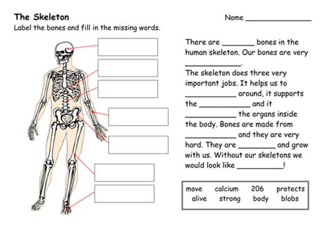 the functions of the human skeleton by miss sunshine teaching resources tes