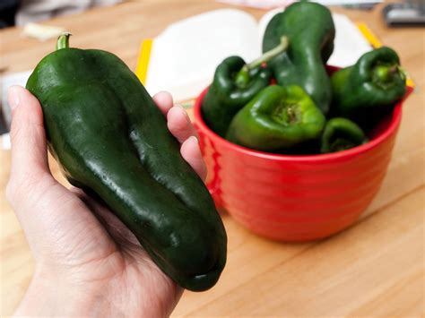 ancho pepper poblano peppers culinary staple of mexico and the southwest