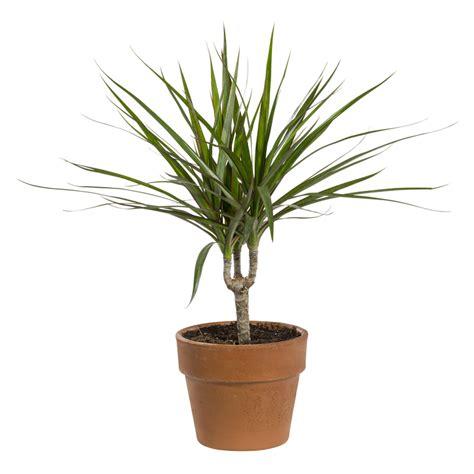 plantes verts d interieur plantes vertes plantes et fleurs d int 233 rieur et maison botanic