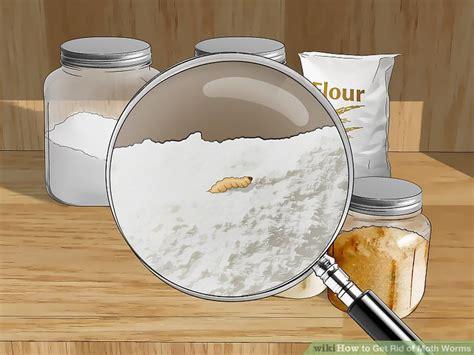 ways   rid  moth worms wikihow