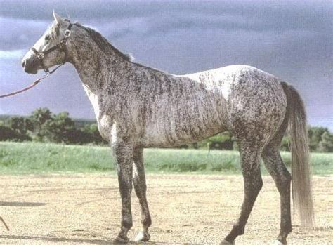 beautiful gallery of unique 23 horses with the most coat colors in the world 23