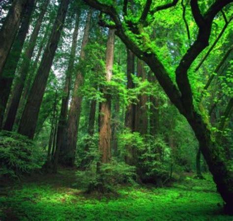 die reiche tier und pflanzenwelt im amazonas regenwald