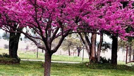 alberi da giardino piccolo 10 piccoli alberi da giardino eurogiardinaggio