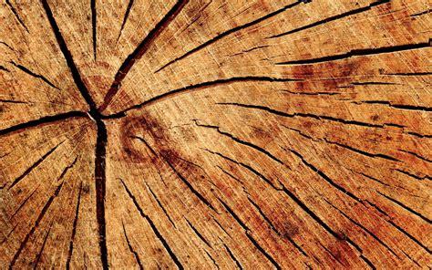 le en bois flotté ils ont r 233 ussi 224 rendre du bois transparent maj
