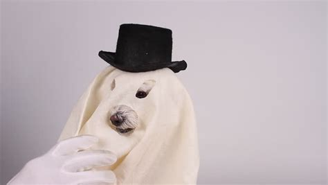 dog ghost dressed in white sheet capped with black top hat