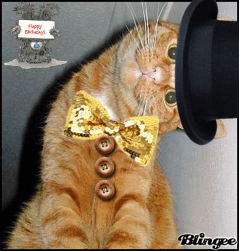 funny cat birthday picture  blingeecom