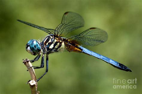 Dragonfly Photograph by Jane Brack