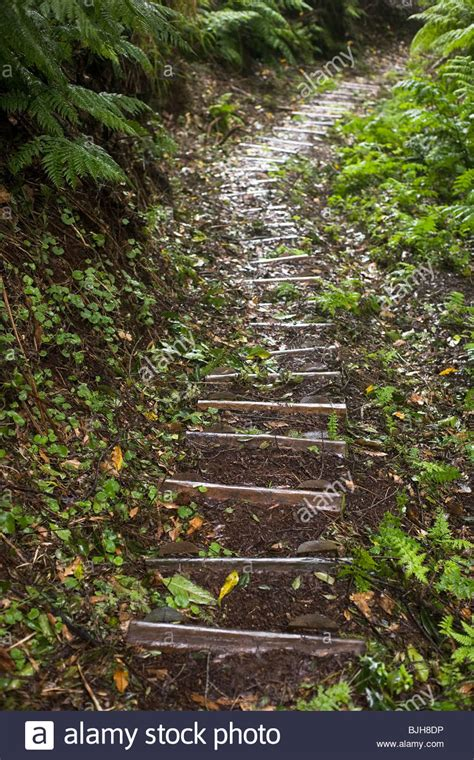 trail at levada do rei through an ancient madeira portugal forest laurisilva stock photos madeira