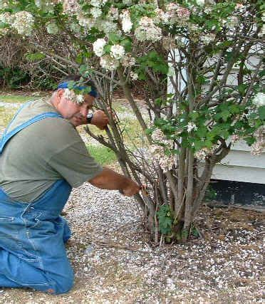 Removing Trees From Backyard by 17 Best Ideas About Stump Removal On Yard