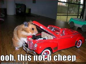 Funny Animals: Funny Hamsters With Guns