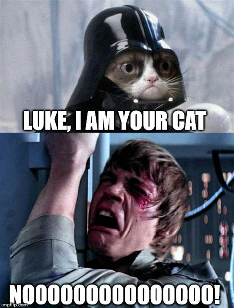 Star Wars Cat Meme - grumpy cat star wars no imgflip