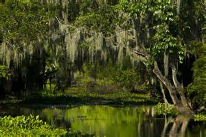 Louisiana Swamp Nature