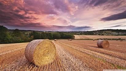 Harvest Desktop 4k Wallpapers Backgrounds Ultra Tv
