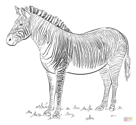 zebra coloring page  printable coloring pages