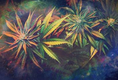 Weed Dope Gifs Motion Cannabis