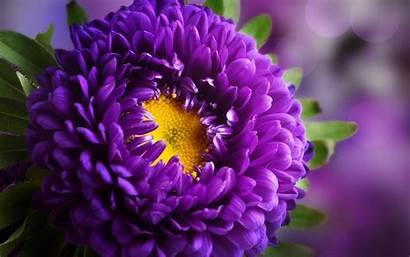 Purple Flower Wallpapers Definition Flowers Computer