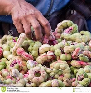 Manila Tamarind Fruit (Pithecellobium Dulce Benth.) Stock ...