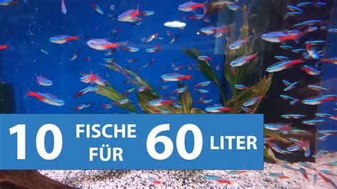 fische kleines aquarium 10 fische f 252 r kleine aquarien ab 60 litern mit