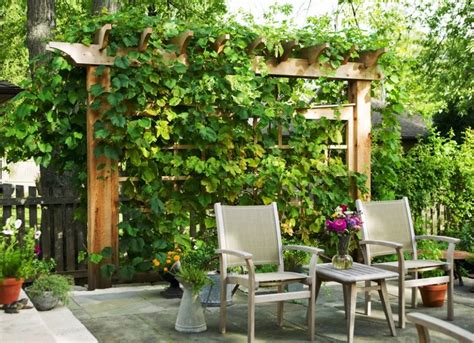 Backyard Trellis Ideas by Backyard Privacy Ideas 11 Ways To Add Yours Bob Vila