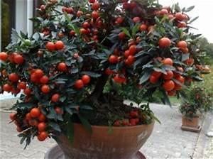 Arbuste D Intérieur : arbres et arbustes d 39 int rieur archives jardiner avec ~ Premium-room.com Idées de Décoration