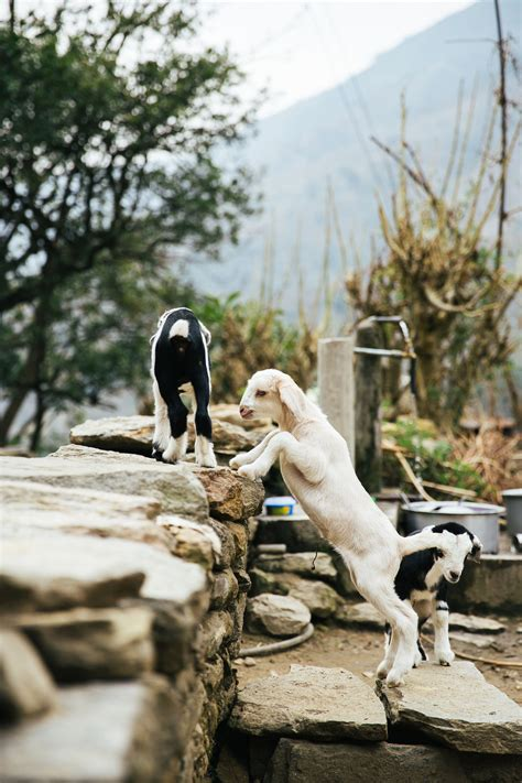 goat names cute male and female pet goat names you ll surely love