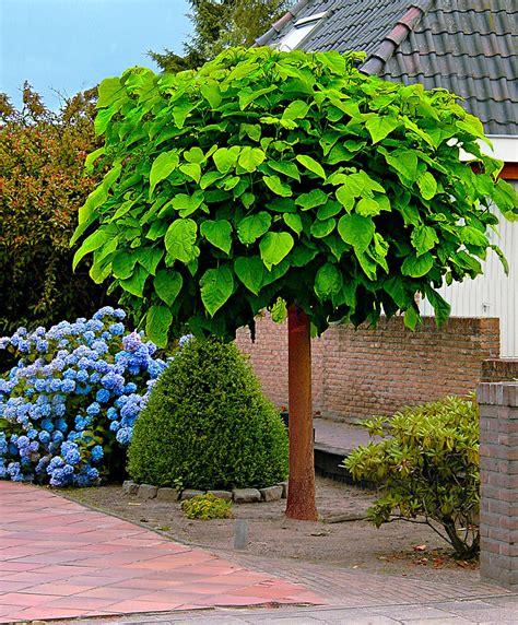 Zierbäume  BaumschulePflanzen Große Pflanzen und Bäume