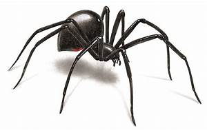 Spider Pictures: Photos & Images of Various Spider Species
