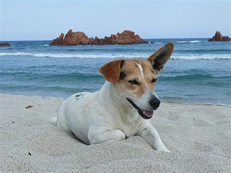 Urlaub Mit Hund Italien  Ferienhaus Italien