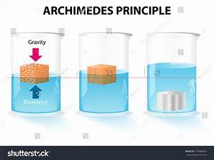 Archimedes Principle Buoyant Force Acting On Stock Vector