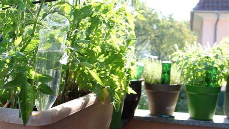 Pflanzen Während Urlaub Bewässern by Beeindruckende Pflanzen Im Urlaub Bew 228 Ssern Innerhalb