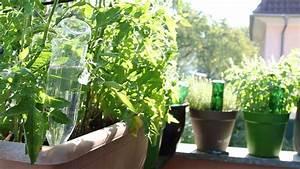 gartentipp pflanzen bewassern mit pet flaschen youtube With französischer balkon mit garten automatisch bewässern
