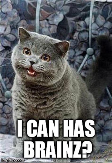 Cheezburger Cat Meme - i can has cheezburger cat imgflip