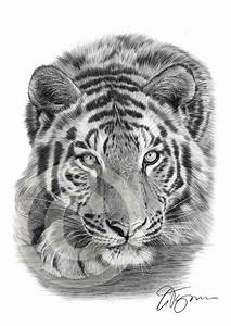Kunst Zeichnungen Bleistift : sumatra tiger bleistift zeichnung drucken von garytymonartwork kunst pinterest bleistift ~ Yasmunasinghe.com Haus und Dekorationen