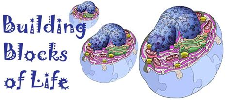 cells  building blocks  life   biologist