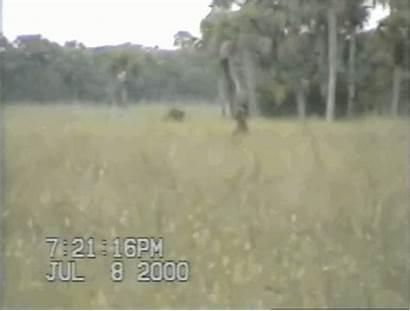 Ape Skunk Bigfoot Florida Trail Shealy Dave