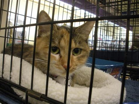 riverside county california animal shelters meet ruthie