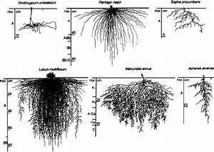 Diversity Of Root Systems  On The Top Row  Root Systems