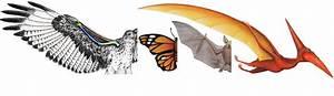 EVOLUTION copy1 on emaze