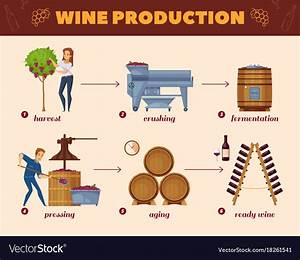 Wine Production Process Cartoon Flowchart Vector Image