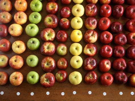 Apple pie flavor without the apples. The Best Apples for Apple Pie   The Food Lab   Serious Eats