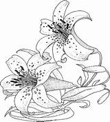 Coloring Lily Pages Flower Flowers Adult Printable Colouring Lilies Sheets Print Realistic Ladybug Printables Bing Anycoloring Sketch Getcolorings Template sketch template