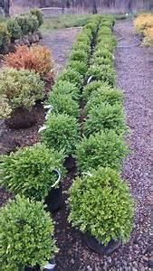 house foundation shrub plantings of barberry spirea blue With exceptional idee amenagement jardin devant maison 16 le jardin de la marquise