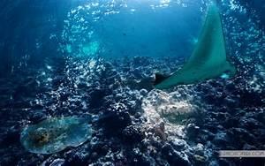 The Most Beautiful And Colorful Aquatic Sea Creatures Life ...