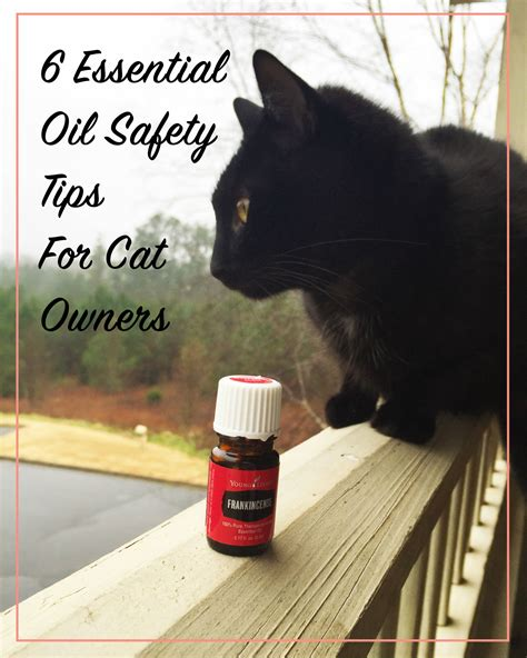essential oils cats 6 essential oil safety tips for cat owners meow lifestyle