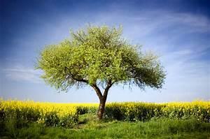 Apfelbaum Schneiden Sommer : apfelbaum bl ht nicht ursachen ma nahmen ~ Lizthompson.info Haus und Dekorationen